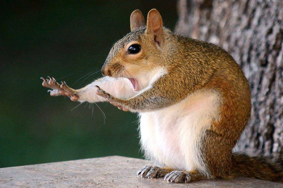The Comedy Wildlife Photography Awards: обрано найсмішніші фотографії диких тварин