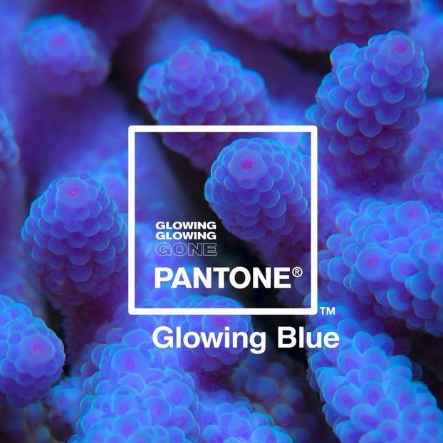 Adobe і Pantone запустили кампанію з порятунку коралових рифів